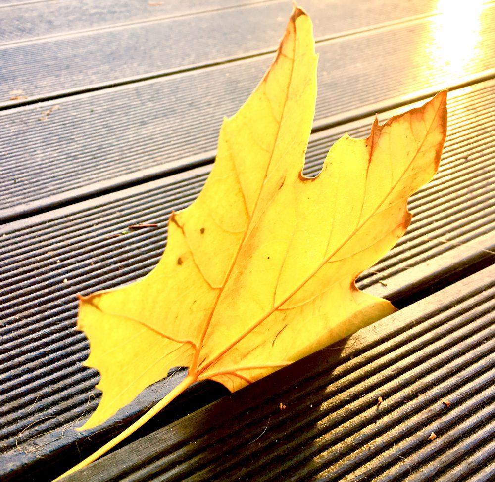 Ayurveda is(s)t frisch und regional – was gilt dabei im Herbst?